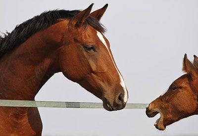 Del-Horses