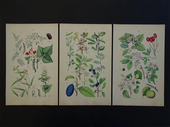 "Old botanical prints set of three 3 matching original 1884 vintage floral poster flower print flowers Hand-colored print 18x29c 7x11"""