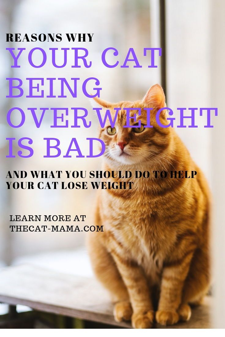 90b026af03c7c44bd50e324fbf1c6e47 - How To Get My House Cat To Lose Weight