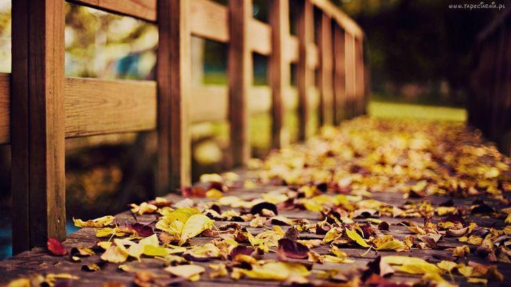 Jesień, Liście, Most