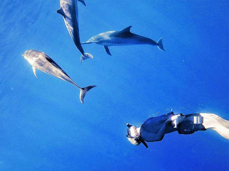 Aunque lo veamos muy distinto, el delfín es el animal más similar al hombre. Pero encierra una cantidad de misterios inexplicables por el momento, que mantienen alerta a la ciencia. En esta nota, la autora cuenta la reveladora experiencia que la llevó a cuestionarse sobre la vida acuática.