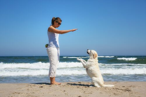 A continuación te vamos a dar unas reglas básicas que tienes que cumplir, si quieres tener un perro obediente.