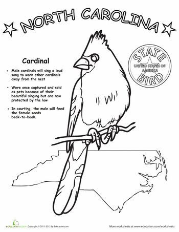31 best The Cardinal N,C,State Bird images on Pinterest