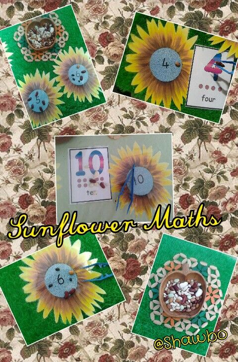 Sunflower Maths, one to one counting and fine motor fun!