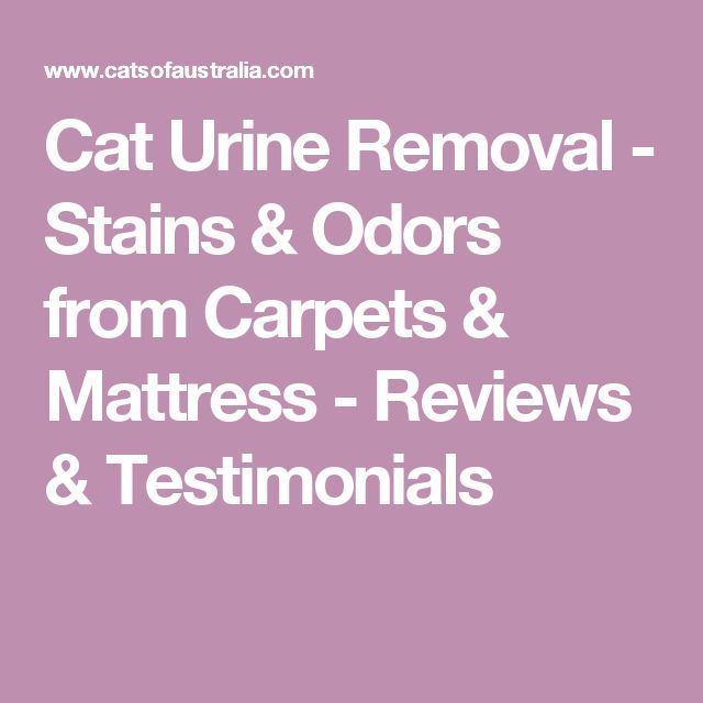 Cat Urine Removal - Stains & Odors from Carpets & Mattress - Reviews & Testimonials