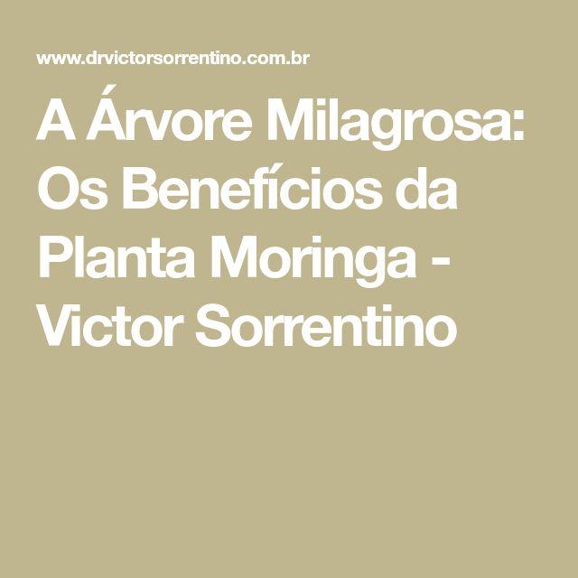 A Árvore Milagrosa: Os Benefícios da Planta Moringa - Victor Sorrentino