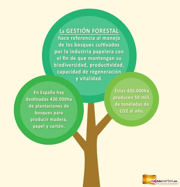 ¿Qué es la Gestión Forestal? Tenemos que estar bien informados sobre ésta ya que repercute en nuestro día a día y en el futuro de nuestros hijos.