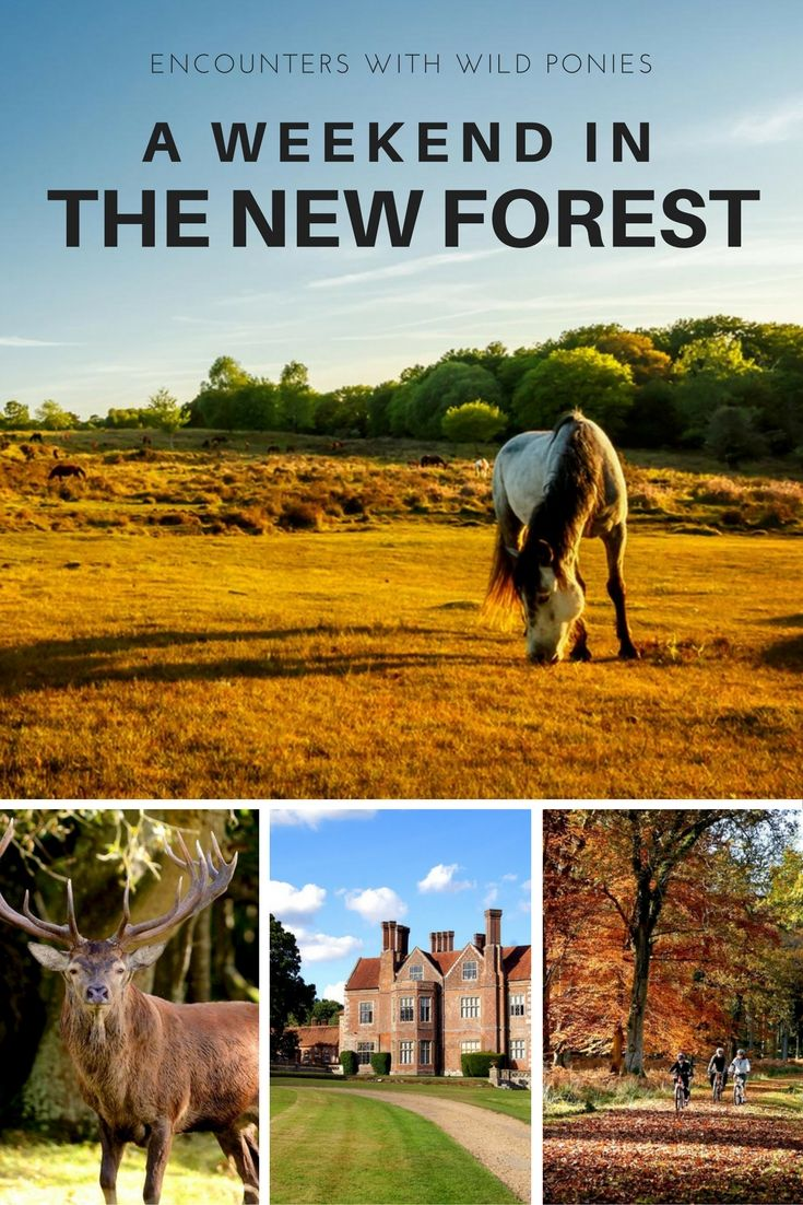 A Weekend in the New Forest - This is a place where outstanding natural beauty, an unspoiled coastline, a unique historic and cultural heritage, quaint towns and villages combine to form one of the best national parks in the UK.