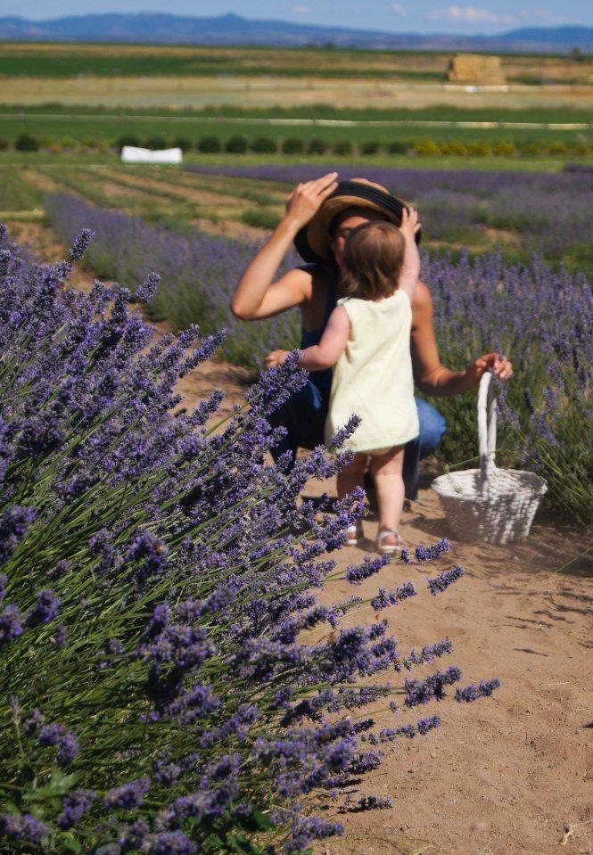 Cascade Lavender Farm in Bend Oregon, beautiful mountain views!