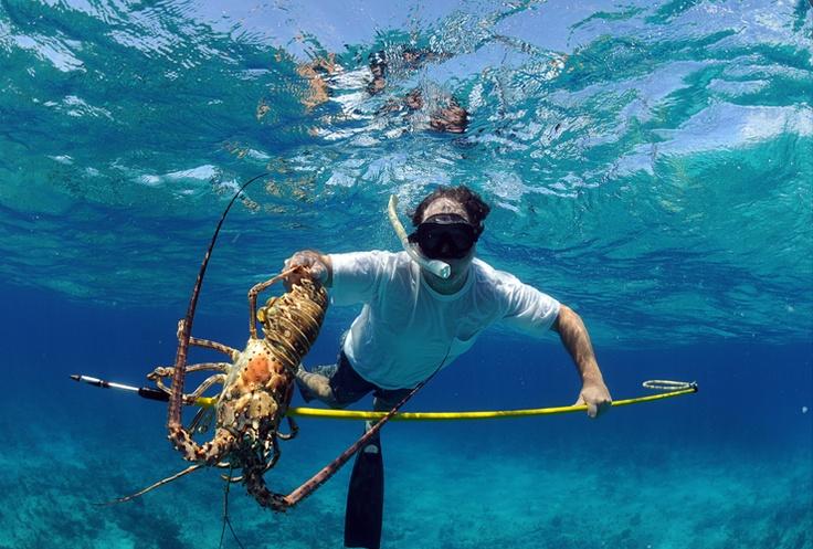 Spearfishing lobster florida keys fishing pinterest for Florida fishing seasons