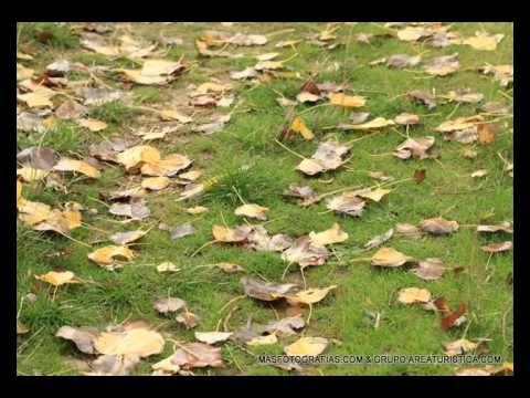 Canción Infantil Las hojas del árbol El Otoño ) - YouTube