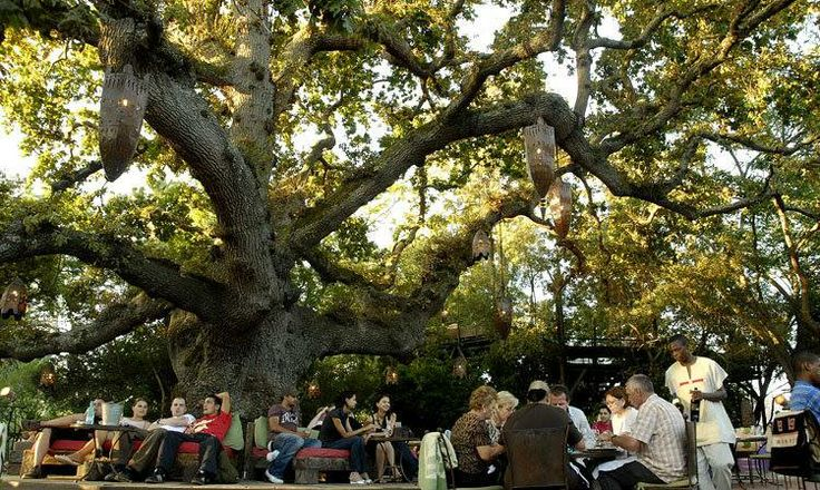 #10 #1000thingstodo #capetown Spend a summers evening in the tree top table at Moyo Stellenbosch   I <3 Cape Town