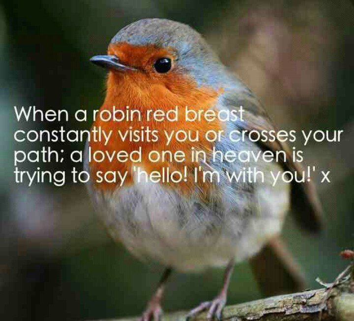 Robin red breast. Nice sentiment, but, I keep seeing lots of Cardinals and Hawks instead!