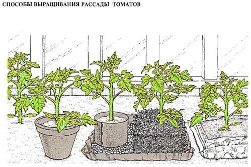 """Выращивание томатов - """"ленивая"""" технология"""
