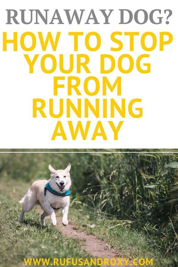 7 Top Secret Tips To Training Your Dog To Come When Called