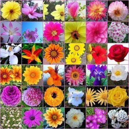 I 38 rimedi floreali di Bach - Ambiente Bio