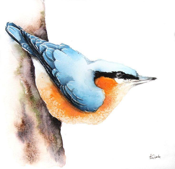 ARTFINDER:  Nuthatch-bird, birds, animals, wildl... by Karolina Kijak -  Original watercolors of Nuthatch Paper 300g  100% cotton, high quality pigments size 18x18cm  Follow me on facebook: https://www.facebook.com/kijakwater...