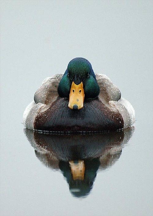 """fortheloveofpawple:  """"After the rain"""" by Michael Wollen (via Pinterest) A ducky aircraft carrier…"""