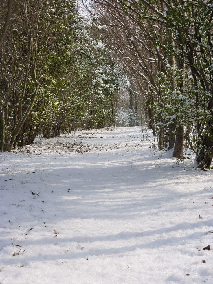 Immerso nella natura invernale