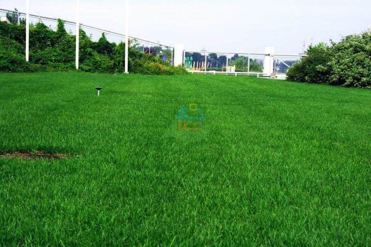 Mocna głęboka zieleń na trawniku? To Lubimy! :)