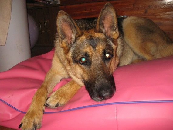 Tough Dog Beds Perfect For Diggers Very Easy by DianesK9Creations