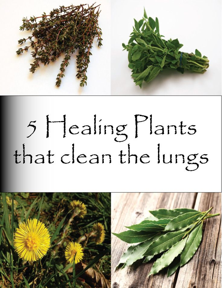 healing plants and herbs essay Medicinal plants can be used to treat some problems in children ginger even in the face of more sophisticated medicines, ginger can still be used to naturally and effectively help children experiencing an upset stomach.
