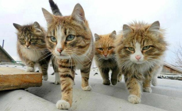 The Roof GangKitty Gang, Funny Cat, Cat Meow, Reservoir Cat, Cat Gang, Kittens,  Tabby Cat, Reservoir Dogs, Animal