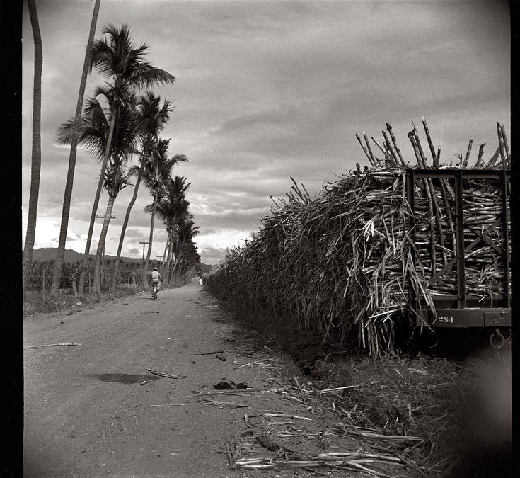 Puerto Rico. Near Ponce negative by Edwin Rosskam