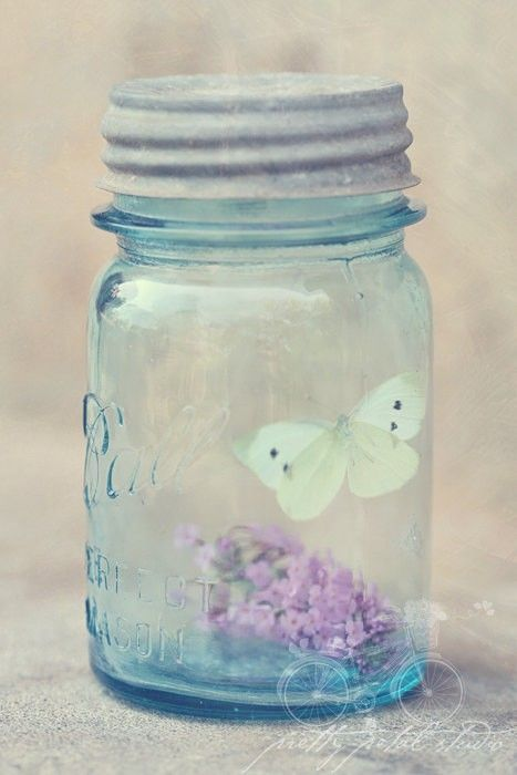 blue jar and butterfly