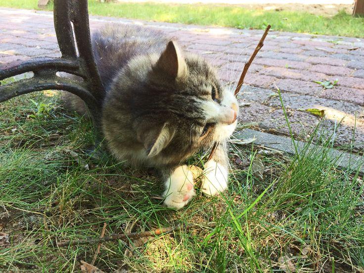 """Cat or dog?"" - summer fun with Puszek the Cat - hotel & SPA Termy Medical WARMIA PARK (Pluski near Olsztyn, Warmia and Mazuria)"