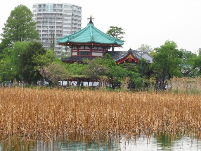 上野 不忍池 Shinobazunoike - Ueno
