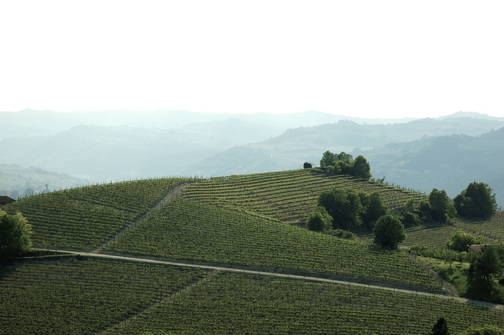 Hazy afternoon in Piemonte, Italy