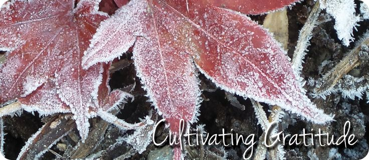 During the holiday season it's a great time to work on cultivating gratitude. www.plantswomandesign.com