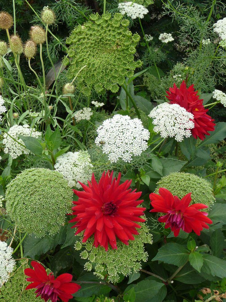 the 25+ best photo de fleur rouge ideas on pinterest | rouge