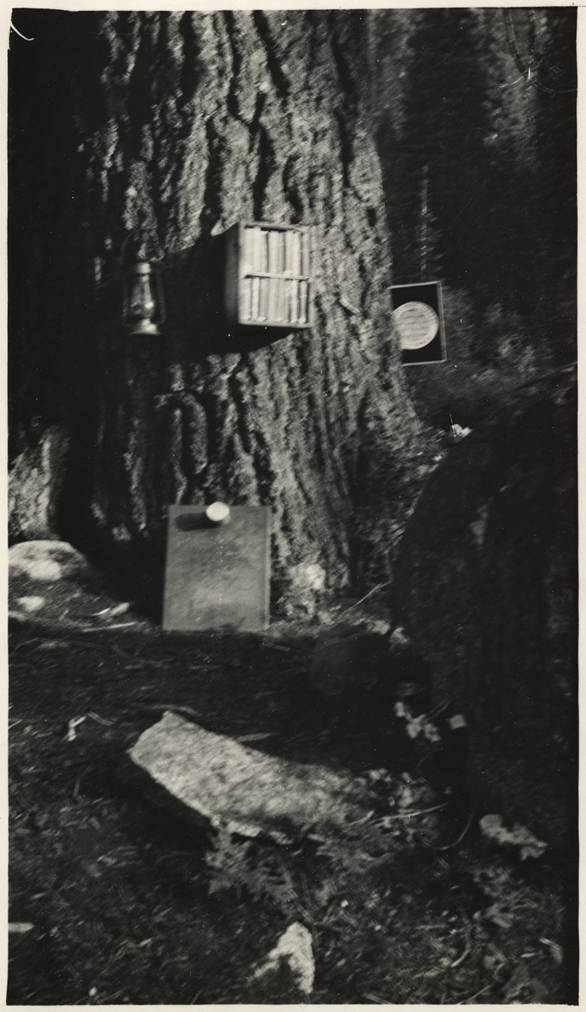 """California State Library has a photo collection of incredible branch libraries in California. This one is literally a 'branch' library!  The """"TNT Powder Box"""" Branch, Siskiyou County.  Total volumes 20. Cardholders 15.  The branch in a box was nailed to the tree."""