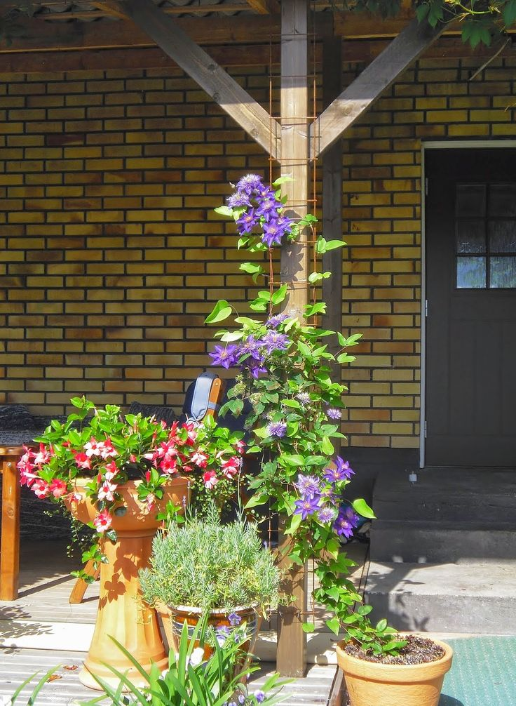 maljaköynnös, laventeli, Multi Blue-kärhö, köynnöstuki, betoniverkko