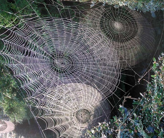 Fractal symmetry...webs. The time and talent that goes into making spider webs is fascinating