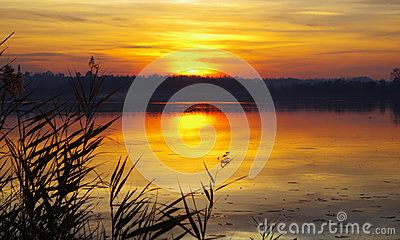 A small lake in Lombardy hidden by reeds at sunset.