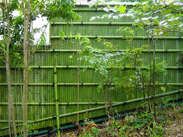 Mesmerizing best natural fence pictures best inspiration for Natural privacy fence