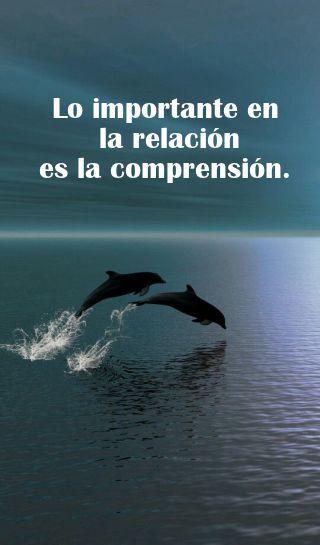 Frases Y Pensamientos Frases De Amor Con Delfines Carlos