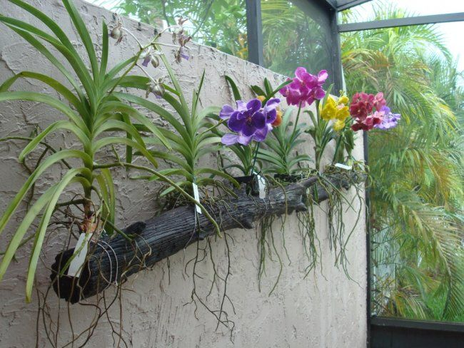 Florida Plants Http Www Orchidgeeks Forum Attachments