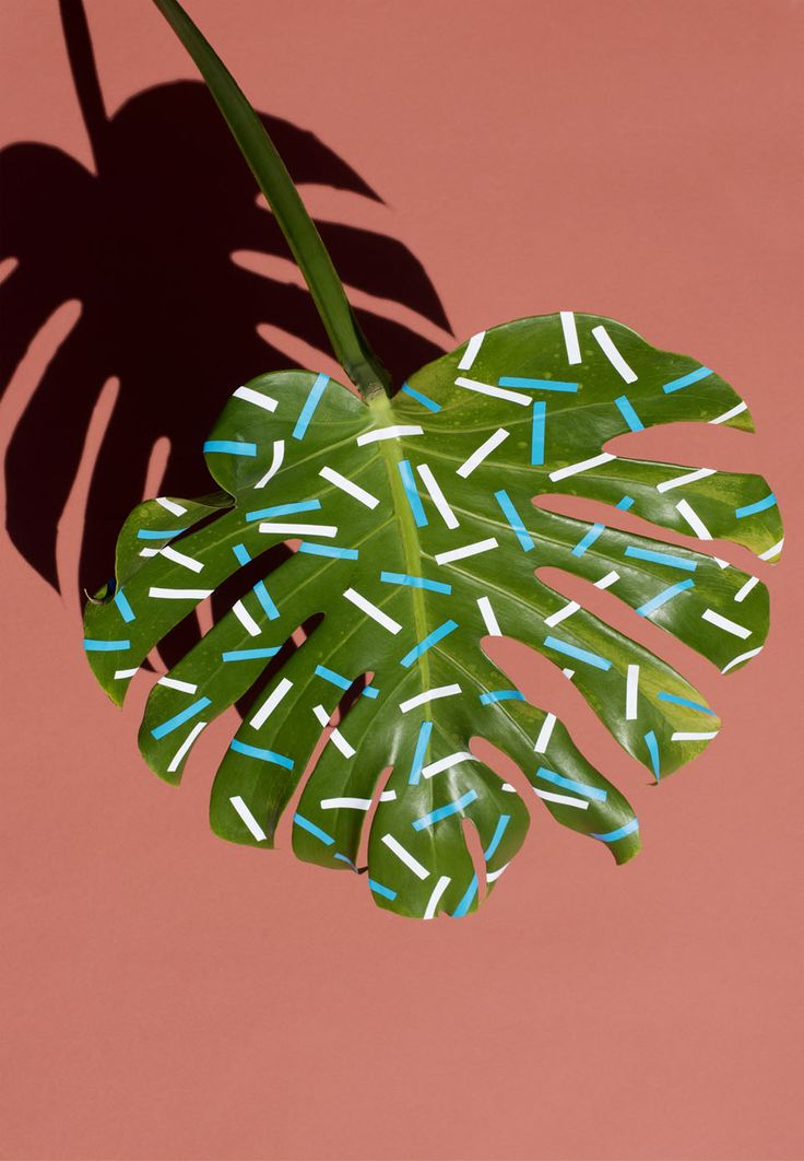 7_Wonderplants_Sarah Illenberger_T.Kauffmann
