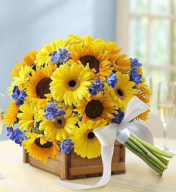 Country #Wedding Mixed Sunflower Bridal Bouquet- medium sunflowers, blue delphinium, blue hydrangeas, yellow Gerbera daisies, and more, bound with a white double satin ribbon $70.00- $110.00