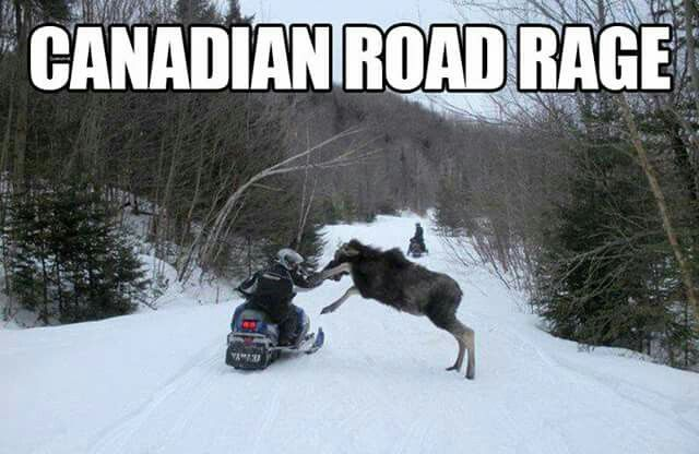 My money is on the moose