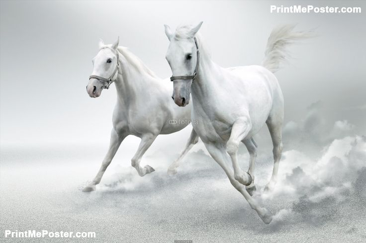 Poster of white horses horse posters poster printmeposter mousepad
