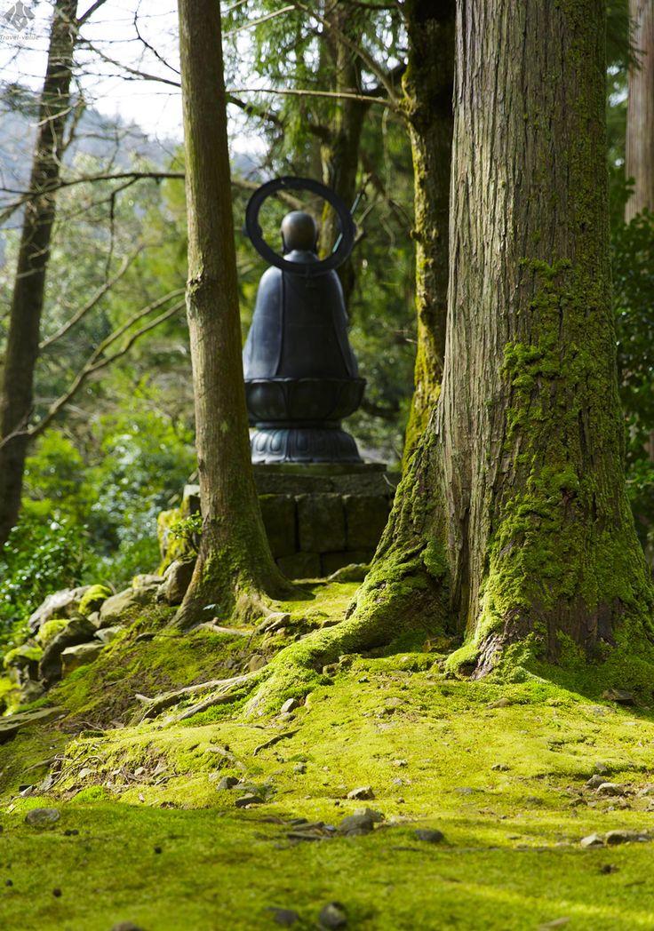 「永平寺」。苔むした杉の大木と像。  #福井 #永平寺