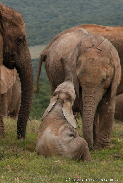 Ellos y yo: cara a cara otra vez en el Addo National Park - Magia en el Camino.