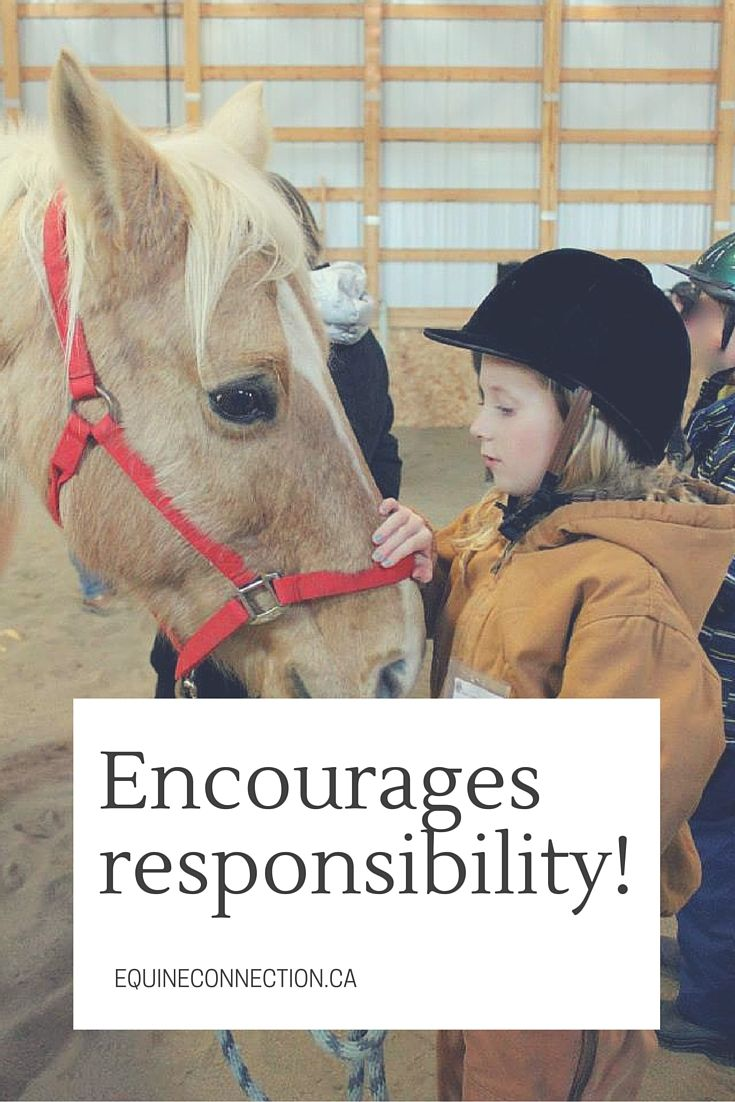 Much like horses, we look for strong leadership and mutual trust and respect is only given and reciprocated once there is a strong leader to follow. #equineconnection