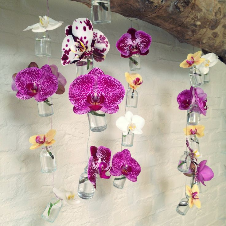 Be creative with your orchid!