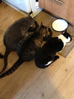 three  cats Momof7-Living it Large